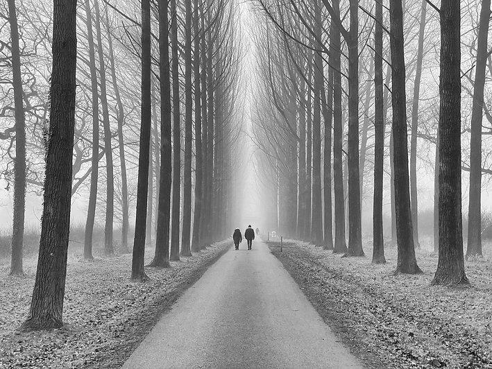 Walmsley Damien. Mystery in the Fog..jpg