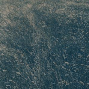 Caitriona Dunnett,  Grass, Path 4, A Well Trodden Path