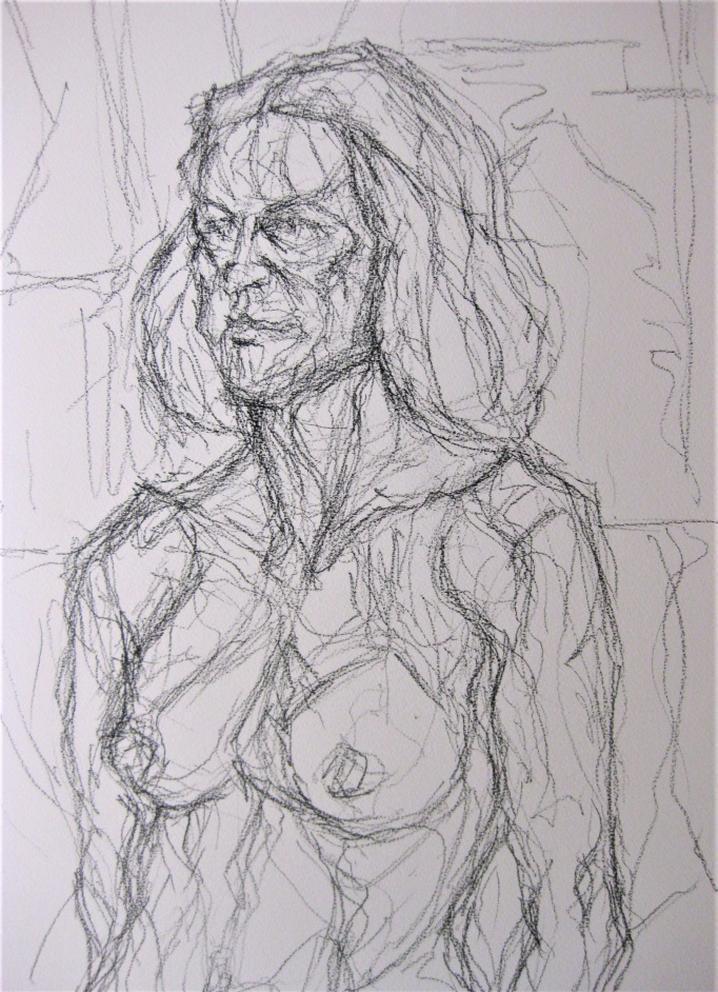 drawing of torso