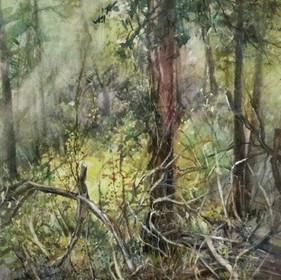 Carol Hill RBSA, Regenerating Woodland 1