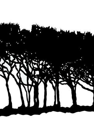 trees on exmoor.jpg