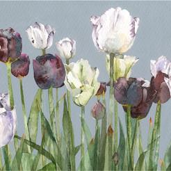Row of Tulips
