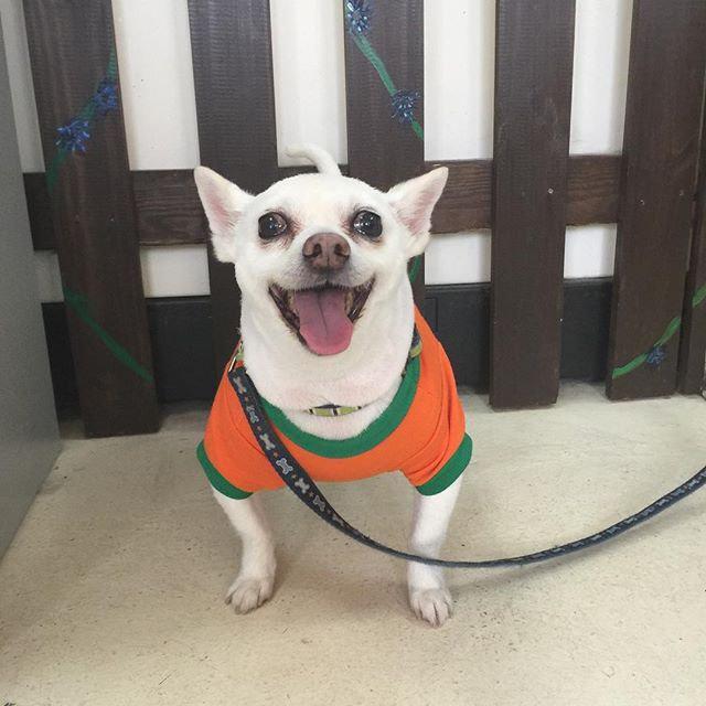Chihuahua, Papillon, Dachshund, Pug