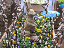 Pansies and Pussy Willow