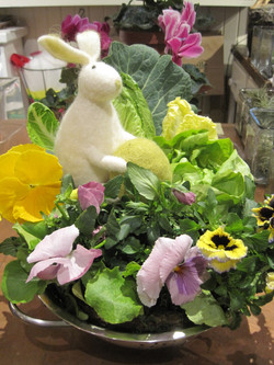 Pansy Bowl for Easter