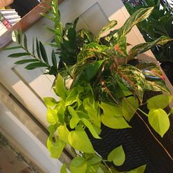 Houseplant Arrangement