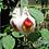 Thumbnail: Boucles d'oreilles cachemire blanc coeur rouge