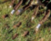 lawn-core-aeration.jpg