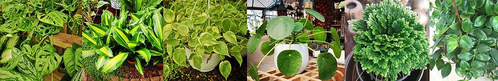 צמחי בית שמומחים אוהבים | סטודיו85 | אדריכלית שירי מוטס לוין
