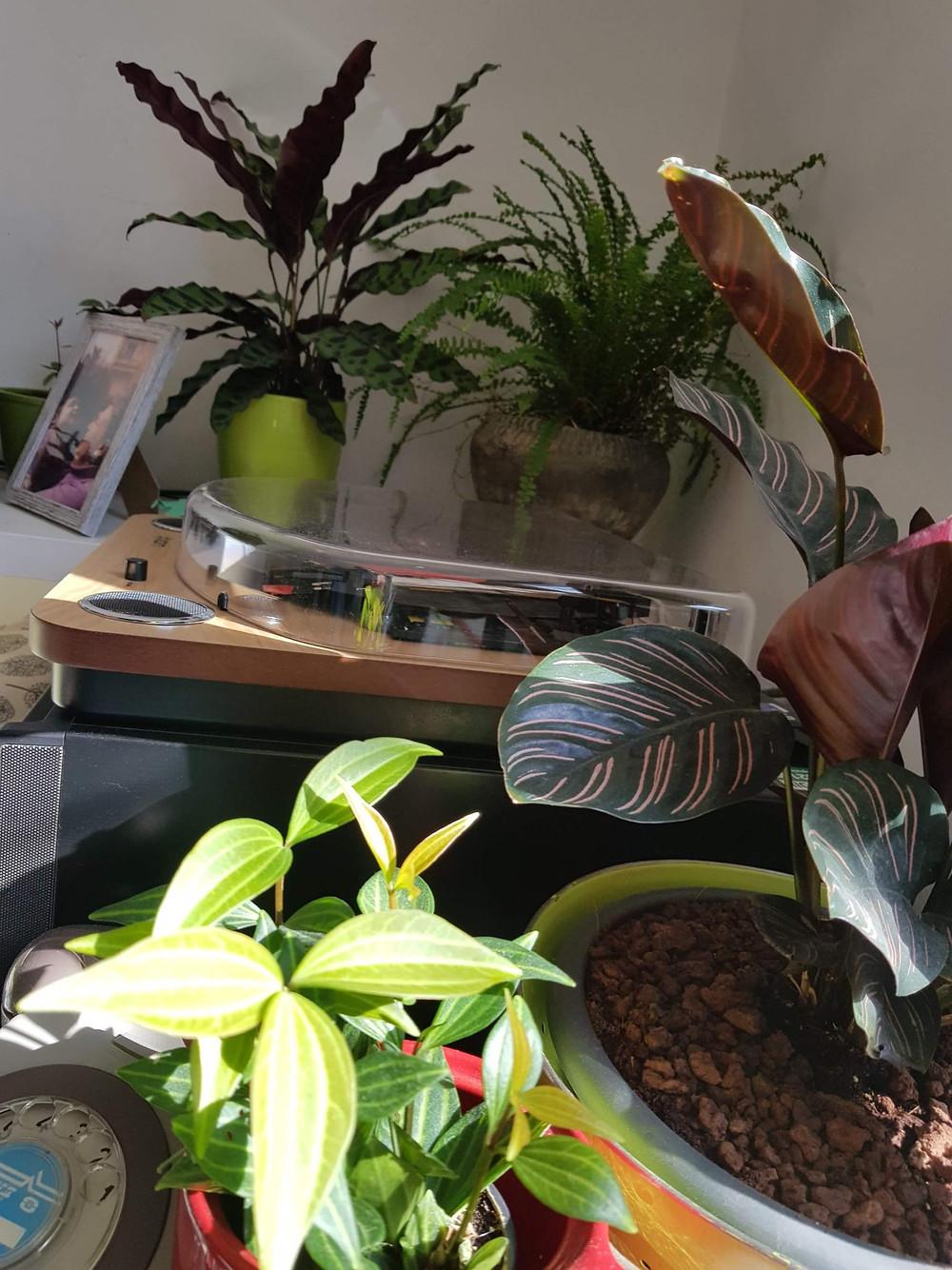 צמחי בית - תכשיט בחדר | סטודיו85 | אדריכלית שירי מוטס לוין