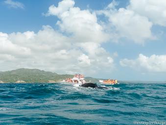 Как мы дважды смотрели китов. Полуостров Самана, Доминиканская Республика.