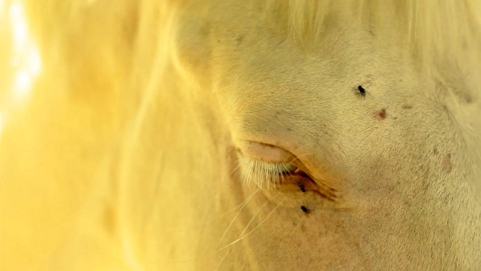 cheval extrait vidéo 2 .jpg