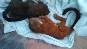 Zřízení záchranné a reintrodukční stanice volně žijících živočichů na Pelhřimovsku