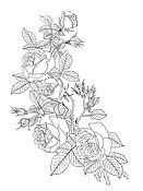 FLOWER-1-ROSES.JPG