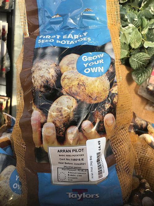 "Seed Potato ""Arran Pilot"" First Early"