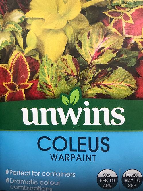"""Coleus """"Warpaint"""""""