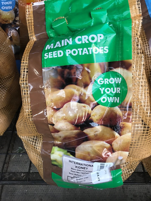 "Seed Potato ""International Kidney"""