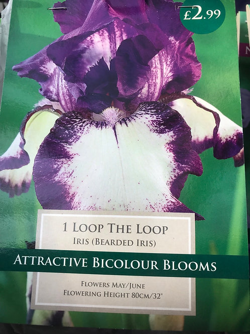 """Iris """"Loop the Loop"""""""