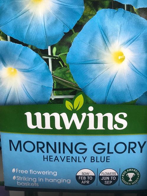 "Morning Glory ""Heavenly Blue"""