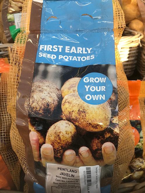 "Seed Potato ""Pentland Javelin"" First Early"