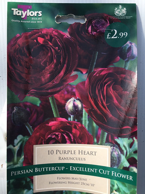 Rananculus 'Purple Hearts'
