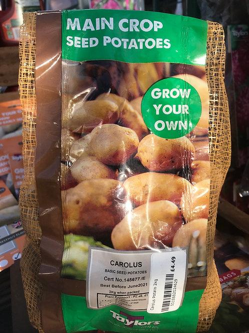 """Seed Potato """"Carolus"""" Main Crop"""
