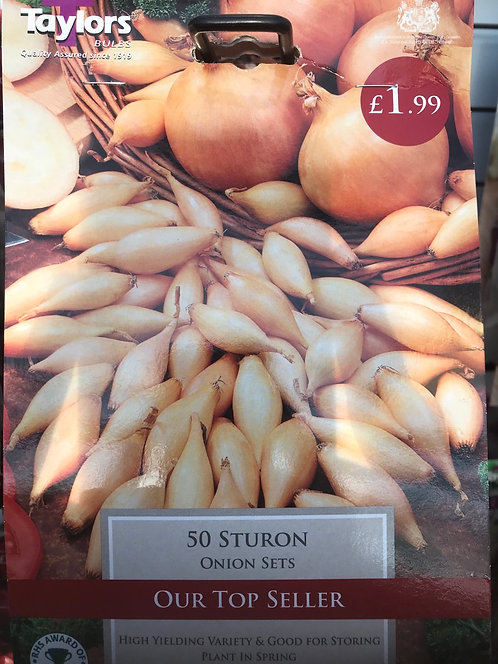 "Onion Set "" Sturon"" (50)"