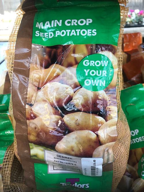 "Seed Potato ""Desiree"""