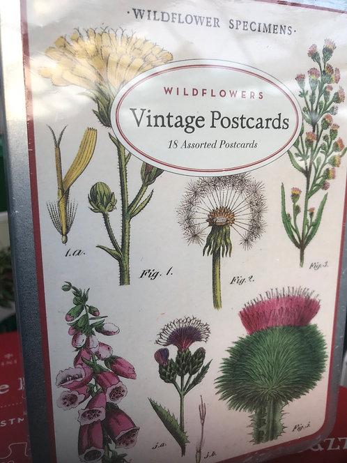 """Cavallini & Co """"Wildflowers"""" Vintage Postcards"""