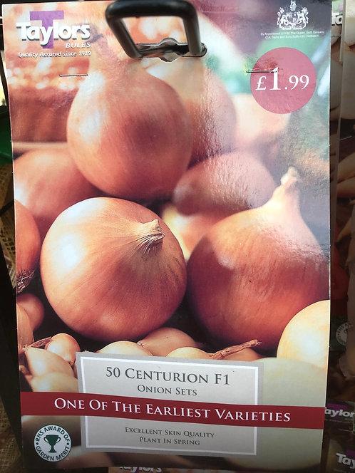 "Onion Set ""Centurion"" (50)"
