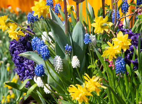 3 Tier bulb planting guide - by Adrian, Nursery Manager