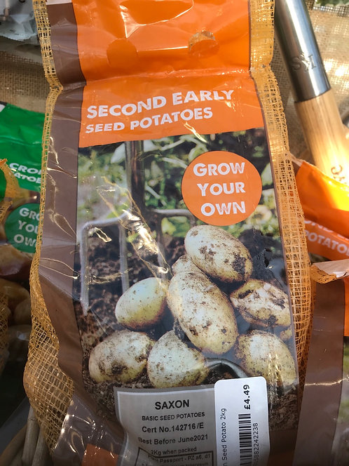 "Seed Potato ""Saxon"" Second Early"