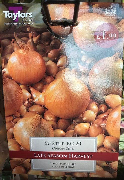 "Onion Set ""Stur BC"" (20)"