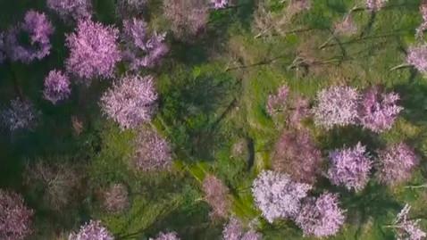 Sakura pass Urabandai