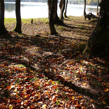 Waiking By The Lake In Autumn