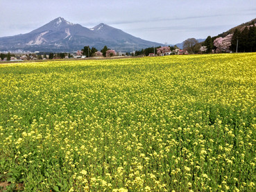 Mt. BANDAI in spring