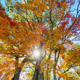 庭の紅葉 Garden autumn
