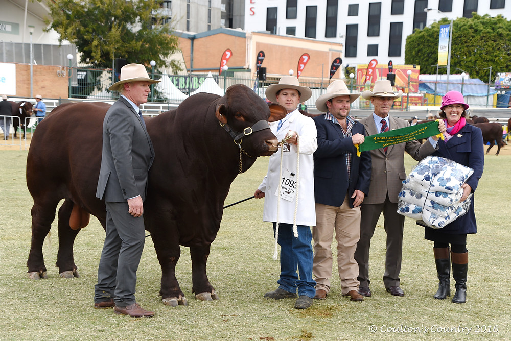 Capturing the tell-tale images of grand champion exhibits that so defines the stud cattle judging
