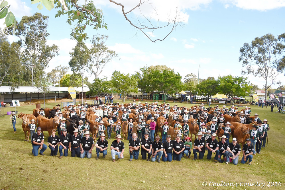 110 children, 110 cattle and a group of enthusiastic organisers made the 2016 Pittsworth Limousin Youth Cattle Camp a huge success.