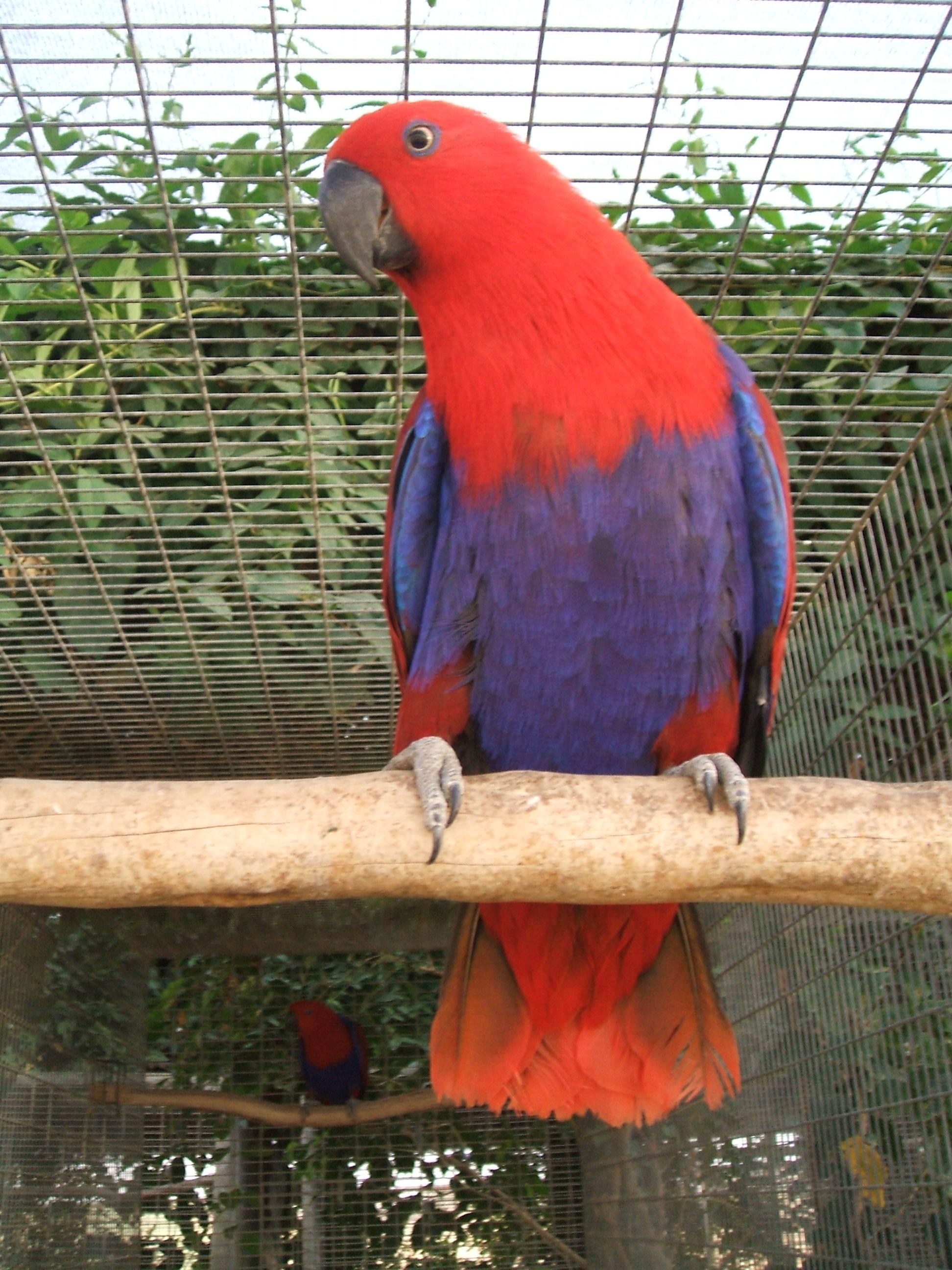Exotic birds5