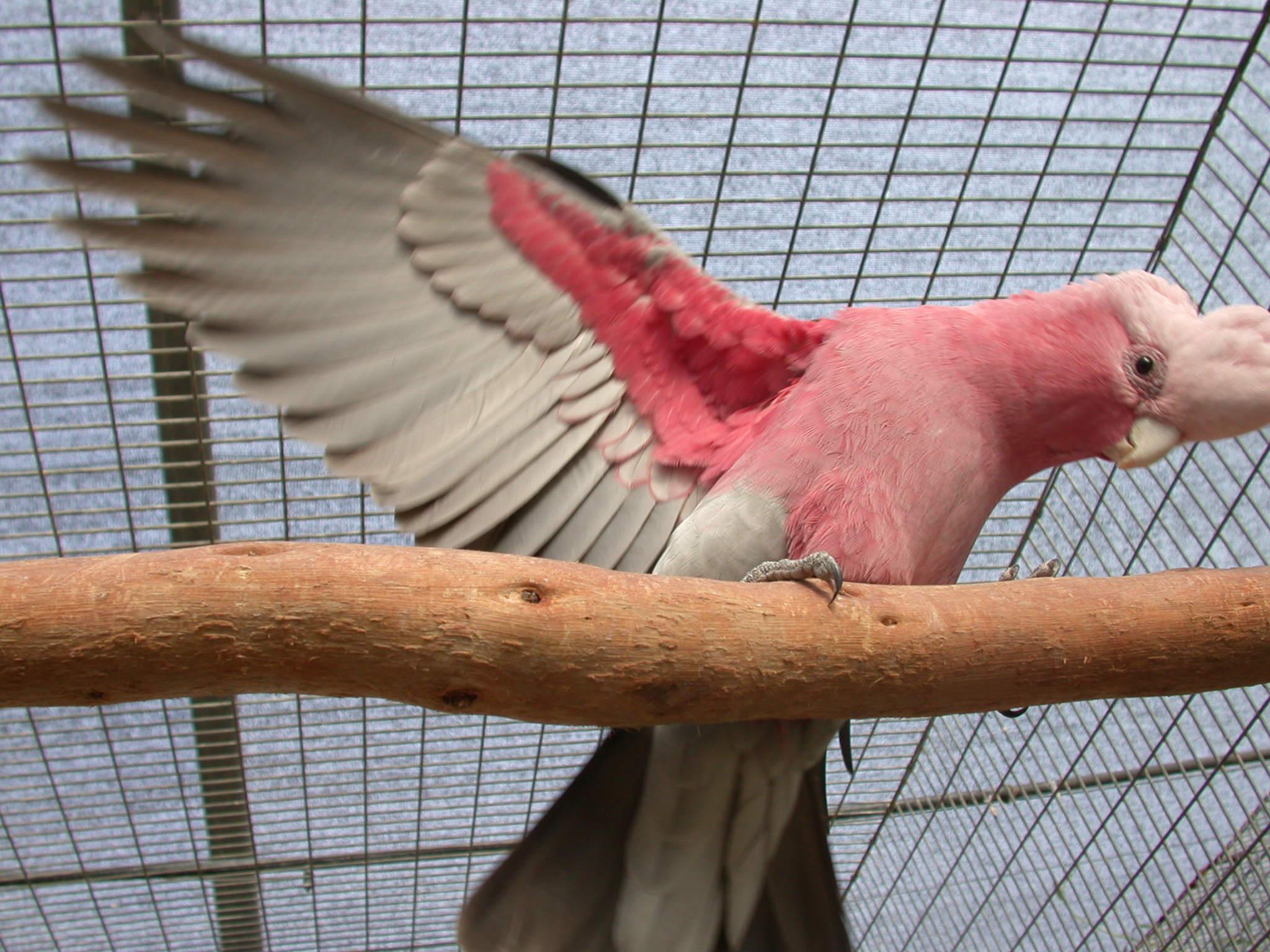 Exotic birds4