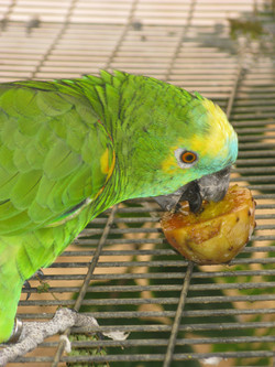 Exotic birds2
