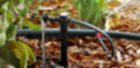 Drip line irrigation system vegetation.jpg