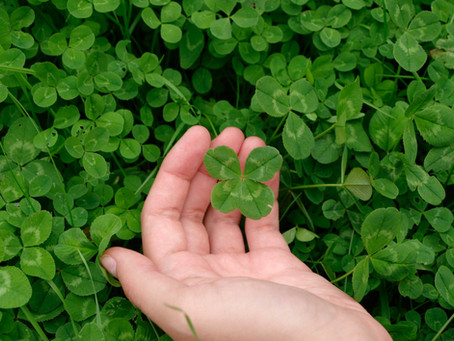 Clover weeds taking over your lawn?