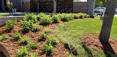 plants shrubs mulch bed.jpeg