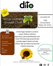 Segue Gardens Summer Camp