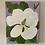 "Thumbnail: Magnolia in Lavender (11""x14"")"