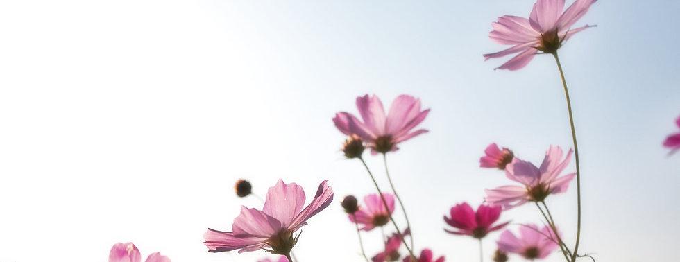 flowers-plants-korea-nature-158756e.jpg