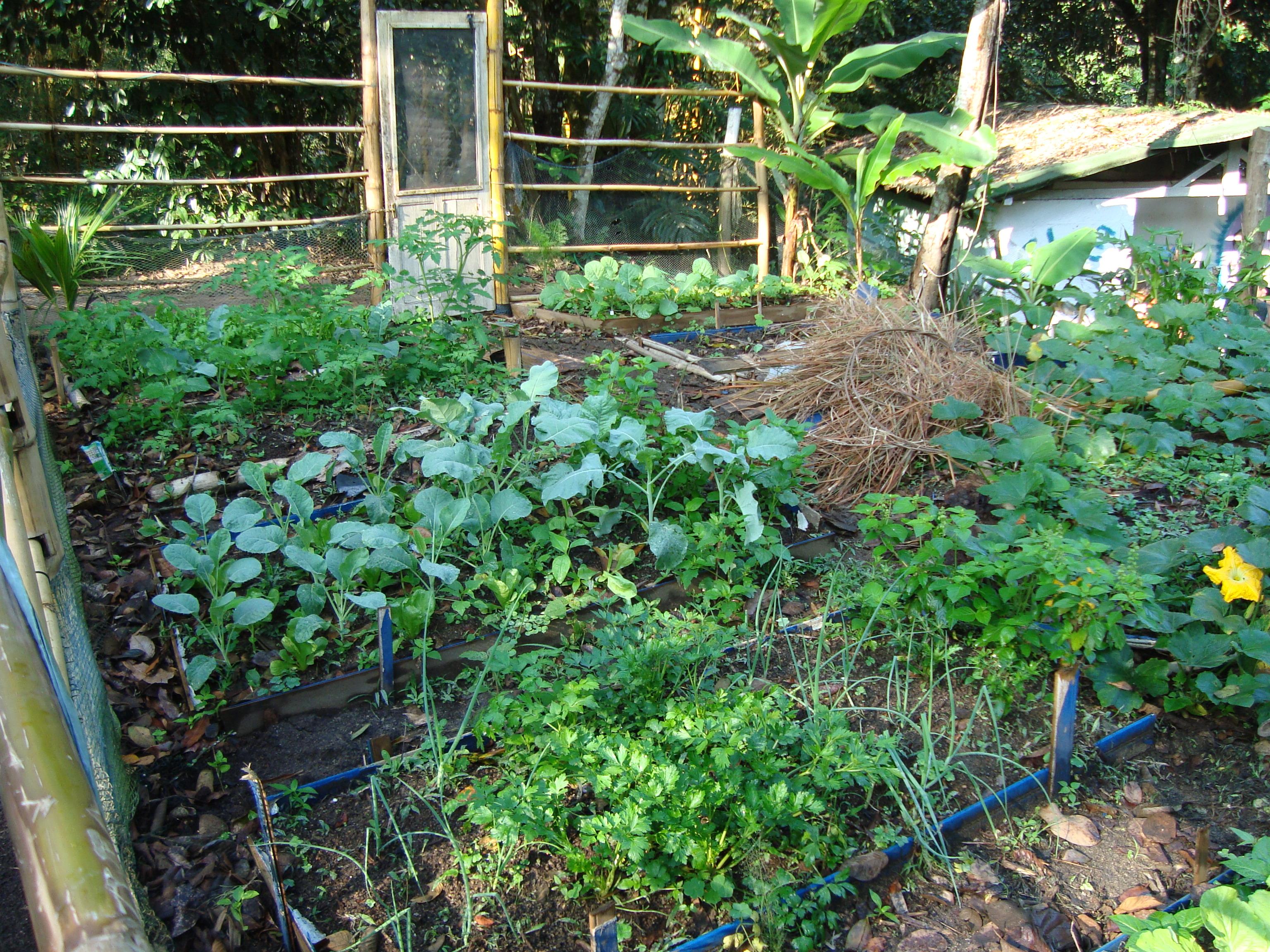 Nossa horta