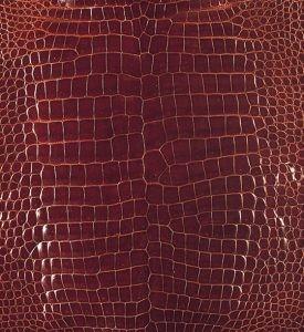 スモールクロコダイル(ポロサス)